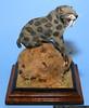 Kevin Batterman<br /> Saber Tooth Cat<br /> 1/20