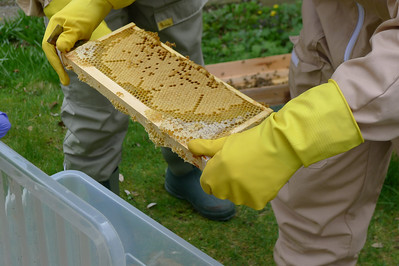 Bee Keeping Shook Swarm