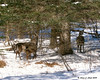 Deer near Pittsburg village<br /> 1/25/08