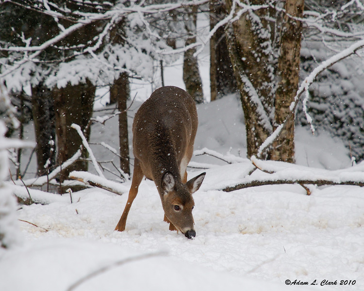 One of the deer that was out when we showed up
