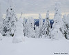 Snow covered trees on Stub Hill in Pittsburg, NH