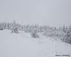 Snow covered trees on Diamond Ridge