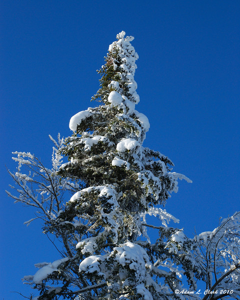 Snow covered tree in Coleman State Park