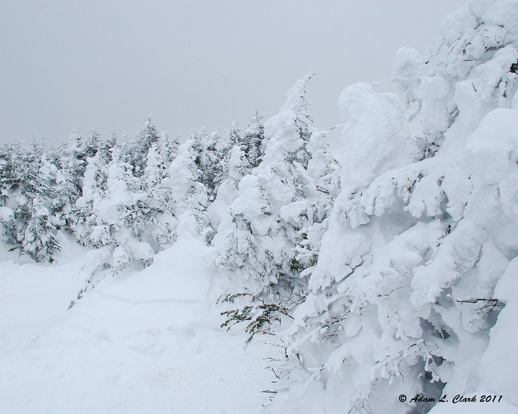Snow covered trees on Dixville Peak