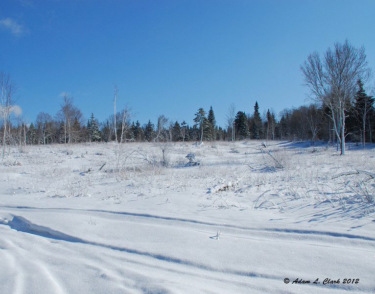 The clear cut behind the camp