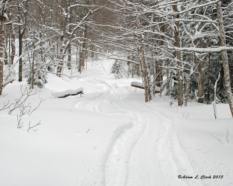 Off trail riding in the fresh powder