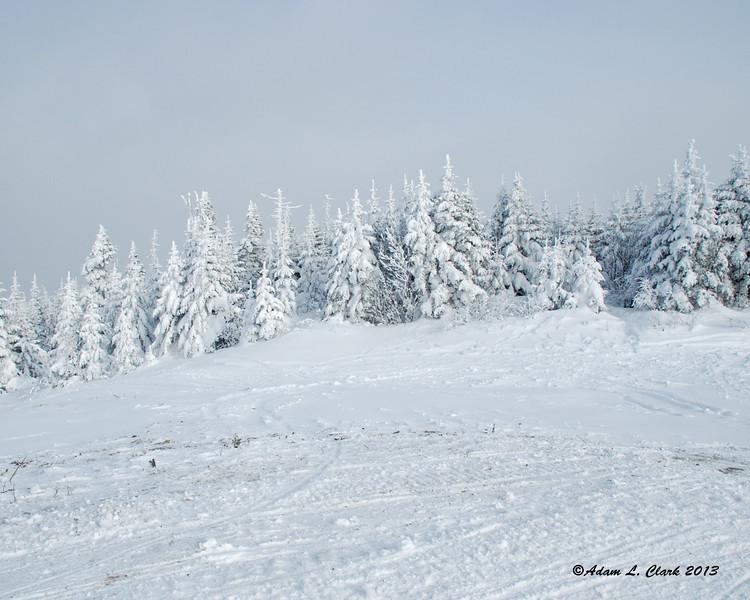 Trees on the open area of Diamond Ridge