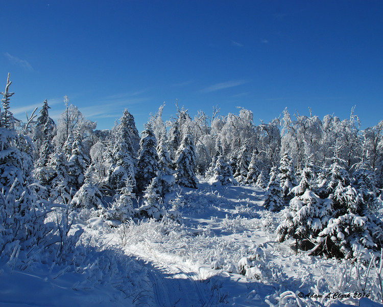 All the trees still had a coating of snow on them