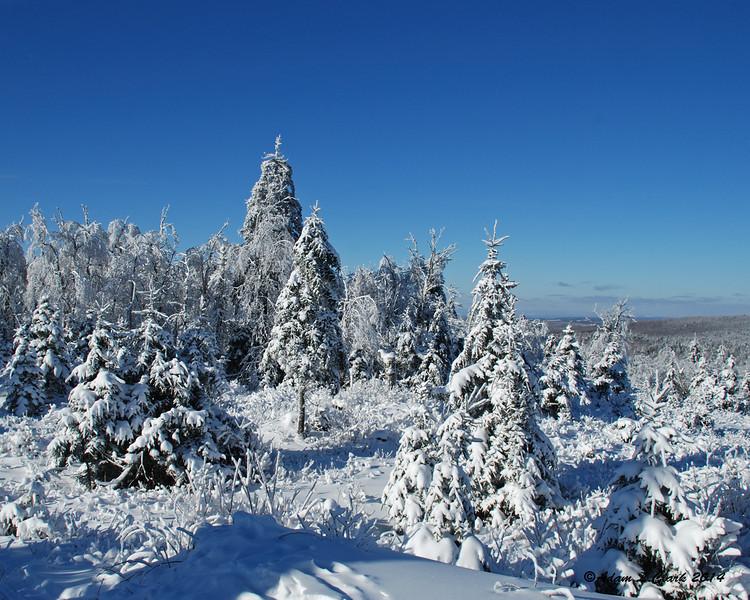Trees around the summit