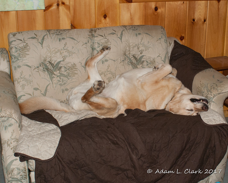 Maggie getting comfortable on the love seat
