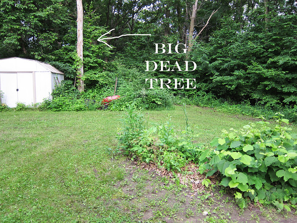 This.  This stupid tree has been dead for years and years.  It was in the way and needed to go.  I started cleaning out this old shed and clearing out the old wood pile.  I thought I would at least get that stuff done and we would worry about the tree later.