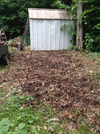 I cleared out all this brush and there was so much poison ivy!!  It was a mess. <br /> Still see that stupid tree?  So now I had the shed cleaned out, which was a huge mess, mice and all, nasty!  I had my land cleared.  Now I had to wait for my husband to figure out what to do with this tree.  It's close to the house so he didn't really want to cut it down on his own.  Things did not end well the last time.  And having it removed could be costly.  But he said he would call around for some quotes.  So my plans were on hold.....or so I thought....