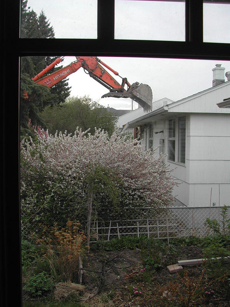 I came home from work one evening to find a machine eating the house next door. By the next afternoon, nothing was left but a hole. They are supposedly leaving one of the large spruce trees, but the other is gone, along with several lovely large cherry bushes. In the meantime, the neighbours are gathering around the hole to talk about it all! Wouldn't it be nice if there were to be a park or a garden instead of a double house there!