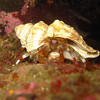 Hermit crab (saw lots of those)