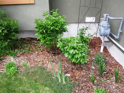 Yard May 2012