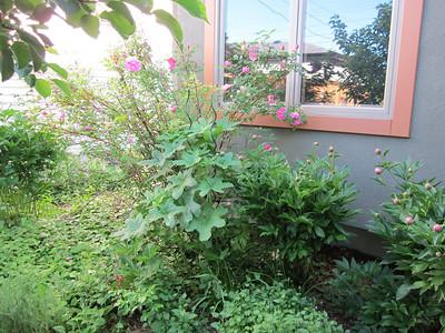 Yard summer 2011