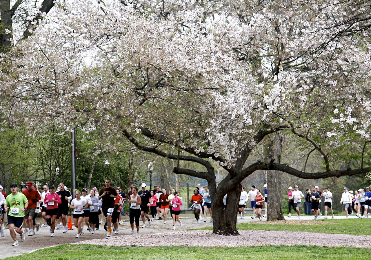 Piedmont Park Atlanta/Cherry tree/race