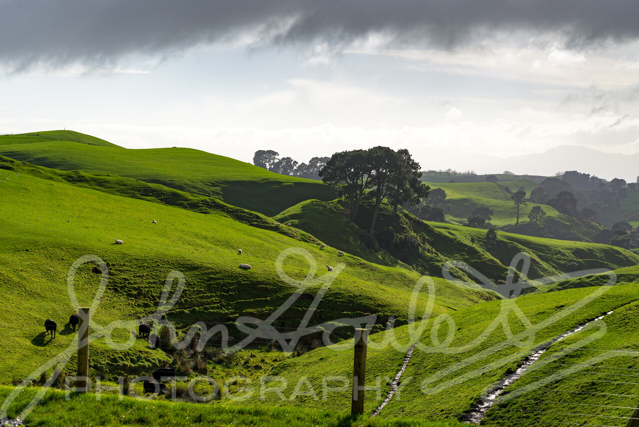 Green Hills of Alexandra