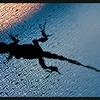 Lizard on a Wet Screen at Sunset