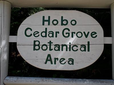 Hobo Cedar Grove  2015