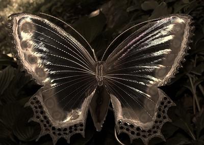 Butterfly in Asheville 3
