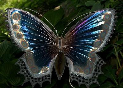 Butterfly in Asheville 1