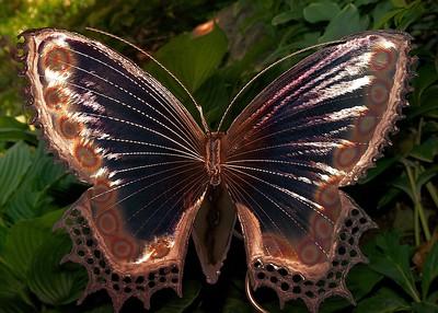 Butterfly in Asheville 2