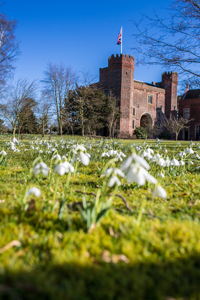 Hodsock Priory Snowdrops