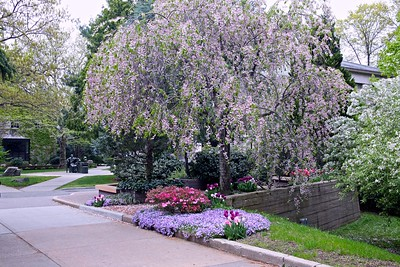 Walking through Hofstra Campus on a Spring Afternoon