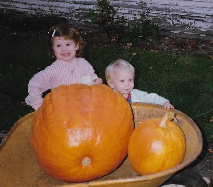 HWP2253 pumpkins