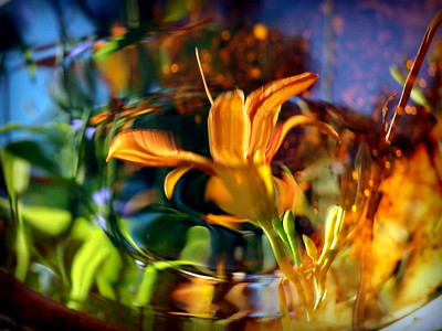 Reflecting on a Tiger Lilly