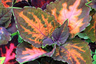 Dunvegan Gardens Greenhouse