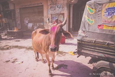 Vrindavan Holi 03 12 2017-27