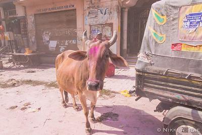 Vrindavan Holi 03 12 2017-28