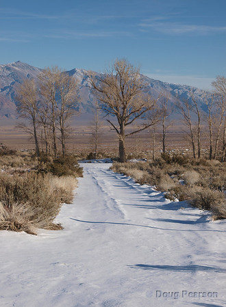 This photo was taken on Dec 27th, 2008 near Big Pine CA after a rare Christmas time storm that left snow on the ground in the Desert.