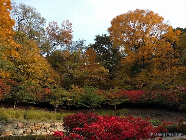 Fall trees in Elmsford, NY