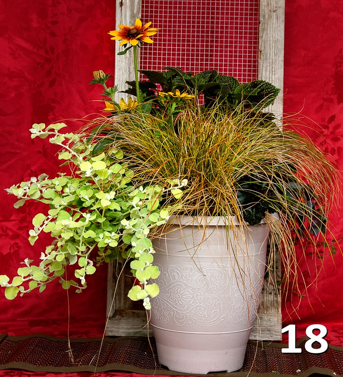 """#18 - 14"""" planter with Autumn color."""