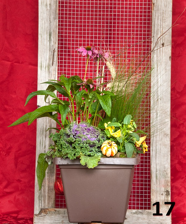 """#17 - 10"""" planter with Autumn color."""