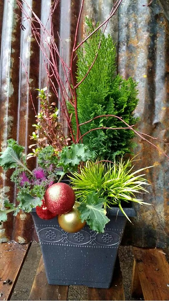10 Charcoal Square Planter - Winter Color & Holiday Decor