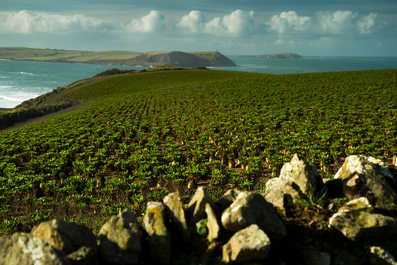 View from Pentire Farm over Camel estuary mouth, Hale bay