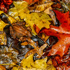 wood frog in fall
