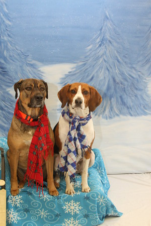 Holiday Pet Photos  - City Lights Bookstore 11.12.16