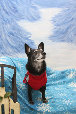 Holiday Pet Photos - Maple Tree Dog Camp