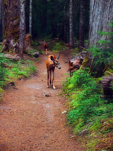 Visitors on the trail to Summerland.