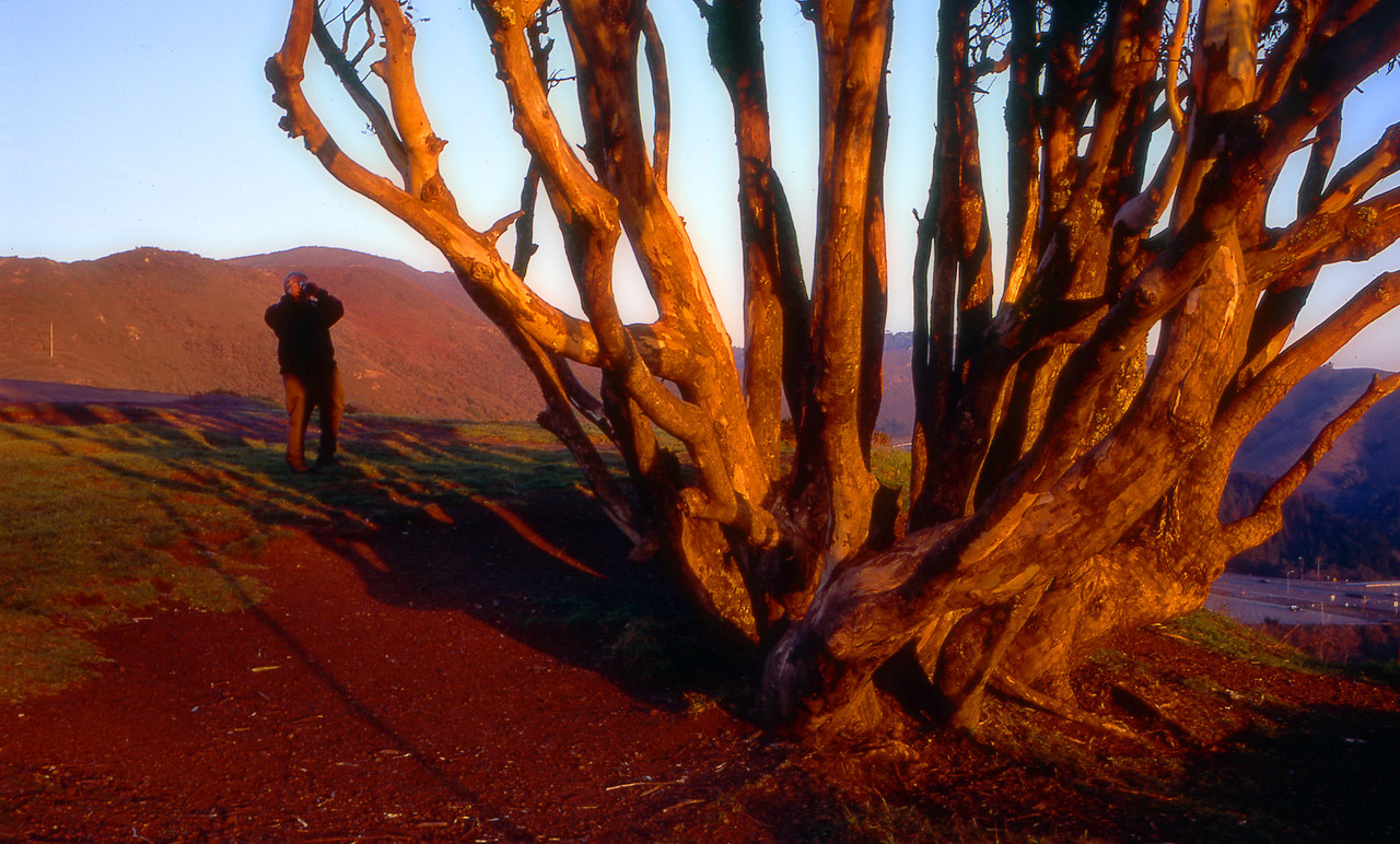 Uncle Bill and I were both taking pictures of this amazing tree, right near Golden Gate. The dawn light was perfect.