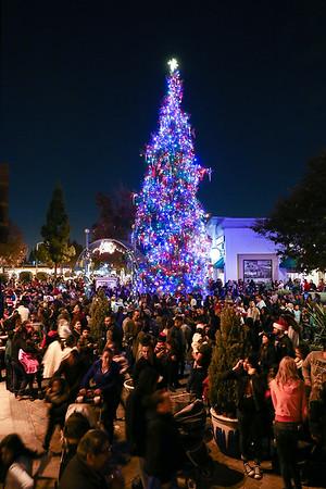 Holiday Tree Lighting - December 2, 2015