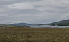 Our last site.......the bleak Dava Moor . This is Lochindorb. On the way from the Findhorn Valley we saw a Curlew and chic on the road.