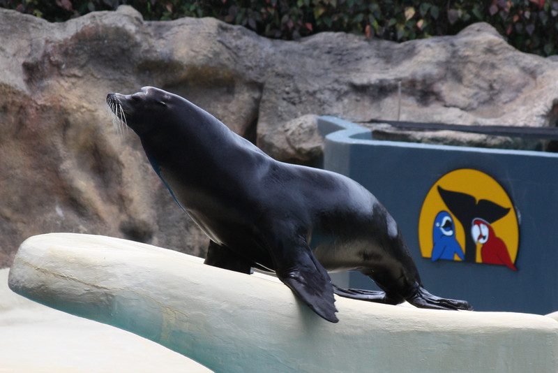 Seal and Sea Lion show at Loro Parque