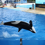 Orca Ocean at Loro Parque