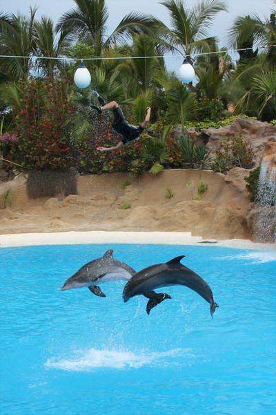 Dolphin Show at Loro Parque